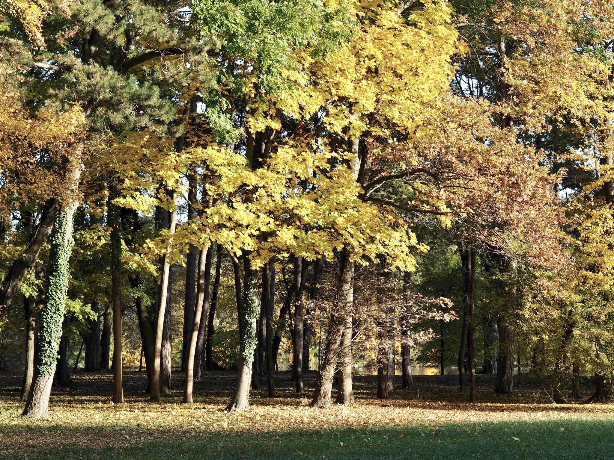 5 Wege, um einen tristen Herbsttag besser zu machen